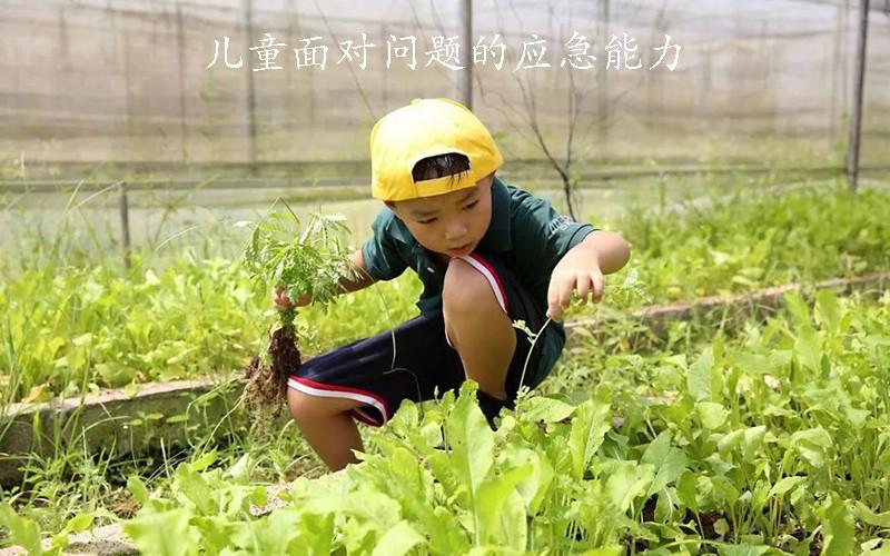 儿童面对问题的应急能力